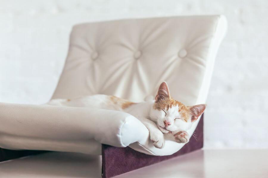 Hogyan óvjuk bőrbútorunkat a macskától?